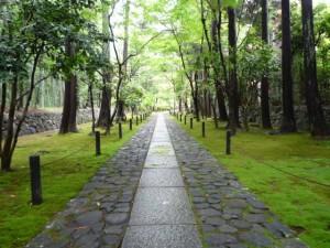 <<梅雨時の沙羅双樹の鹿王院を訪ねる>>mousugu